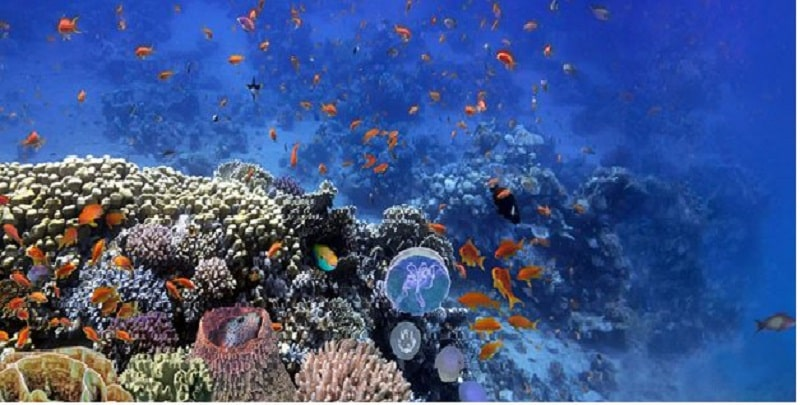 How to Choose Best Aquariums - CHAMPAGNE REEF