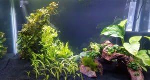 fish tank setup tips for the aquarium novice