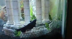 best tropical fish tank