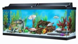 40 gallon aquarium