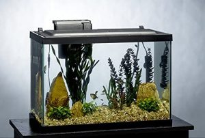 best beginner fish tanks