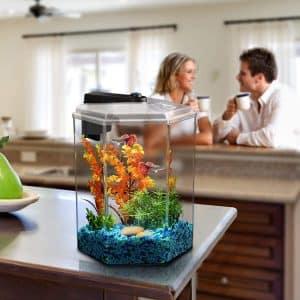 hexagon fish tank hexagon aquarium
