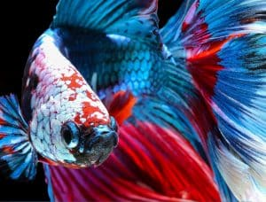 where can i buy betta fish food