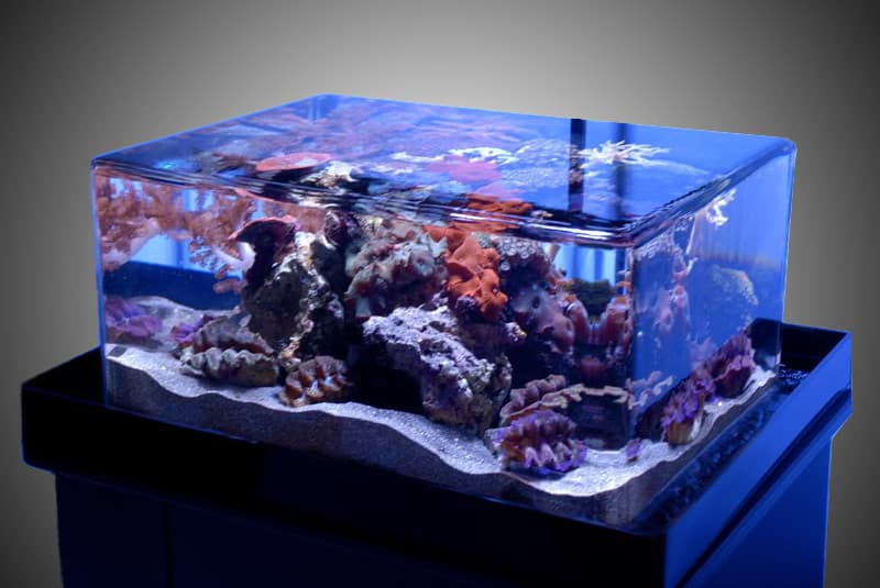 how to setup an aquarium