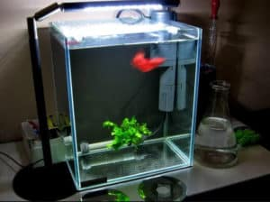 what to seek when acquiring 30 gallon container