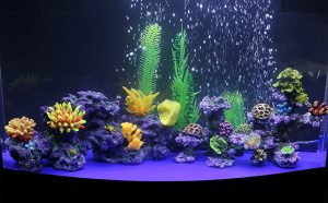 This is an image of Best 55 Gallon Fish Tank
