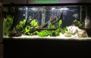 aquarium undergravel filter