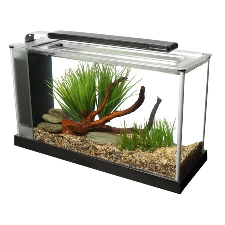 Kids Fish Tank - CHAMPAGNE REEF
