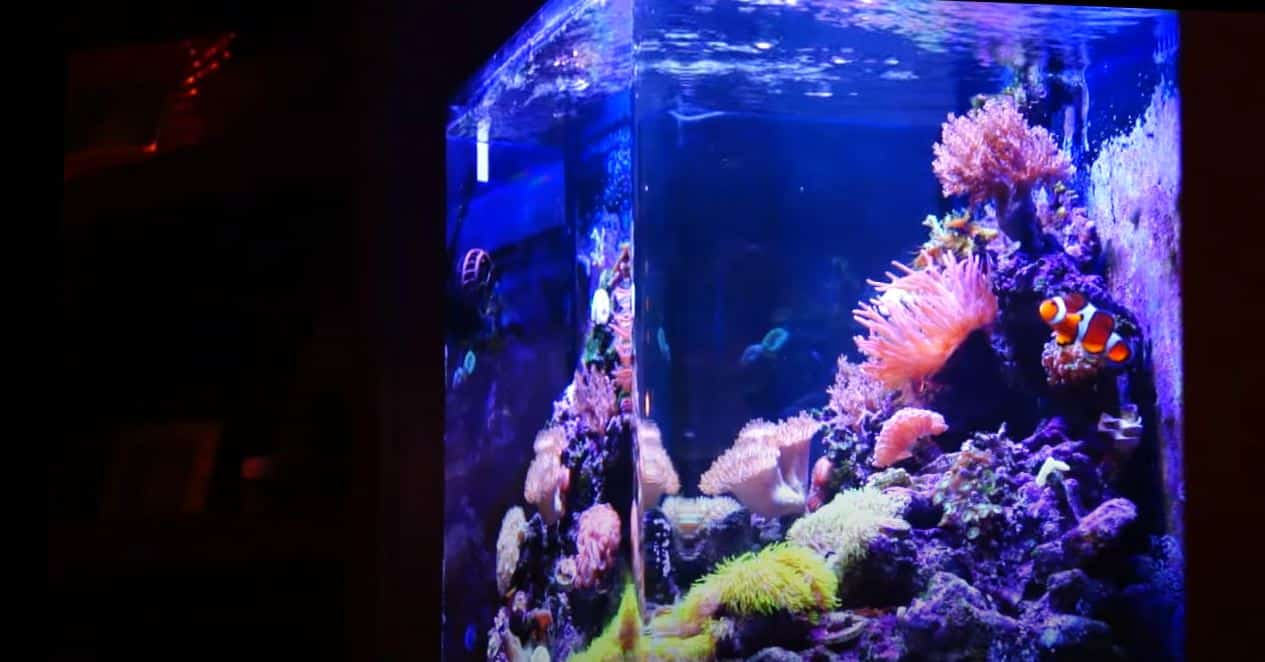 🥇 What To Seek When Acquiring 30 Gallon Container - CHAMPAGNE REEF