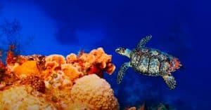 best turtle aquarium