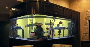 l shaped fish tank