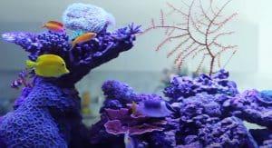 best led lighting for reef tanks