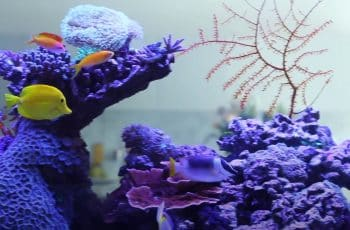 best led lighting for reef tanks