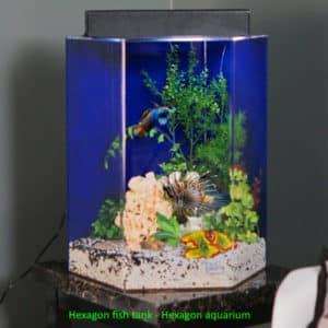 Hexagon fish tank - Hexagon aquarium