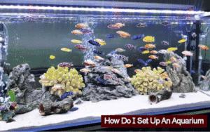 How Do I Set Up An Aquarium