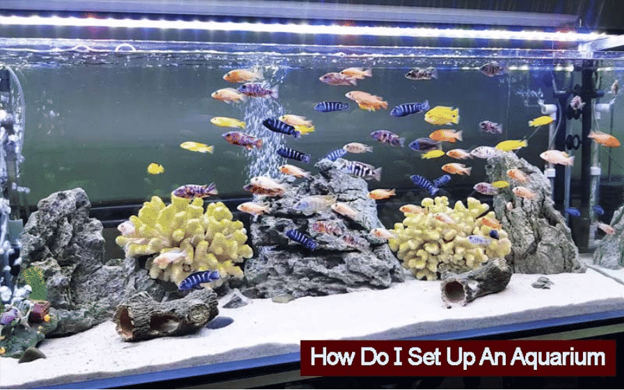 How Do I Set Up An Aquarium