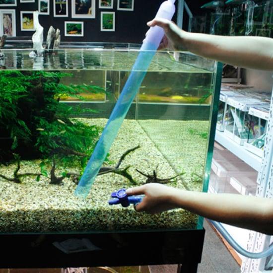how to clean the aquarium