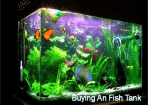 what should be considered when buying an fish tank