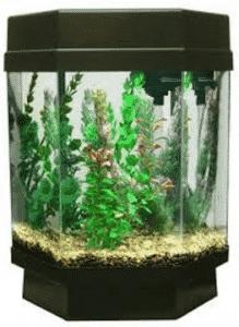 best glass fish tank