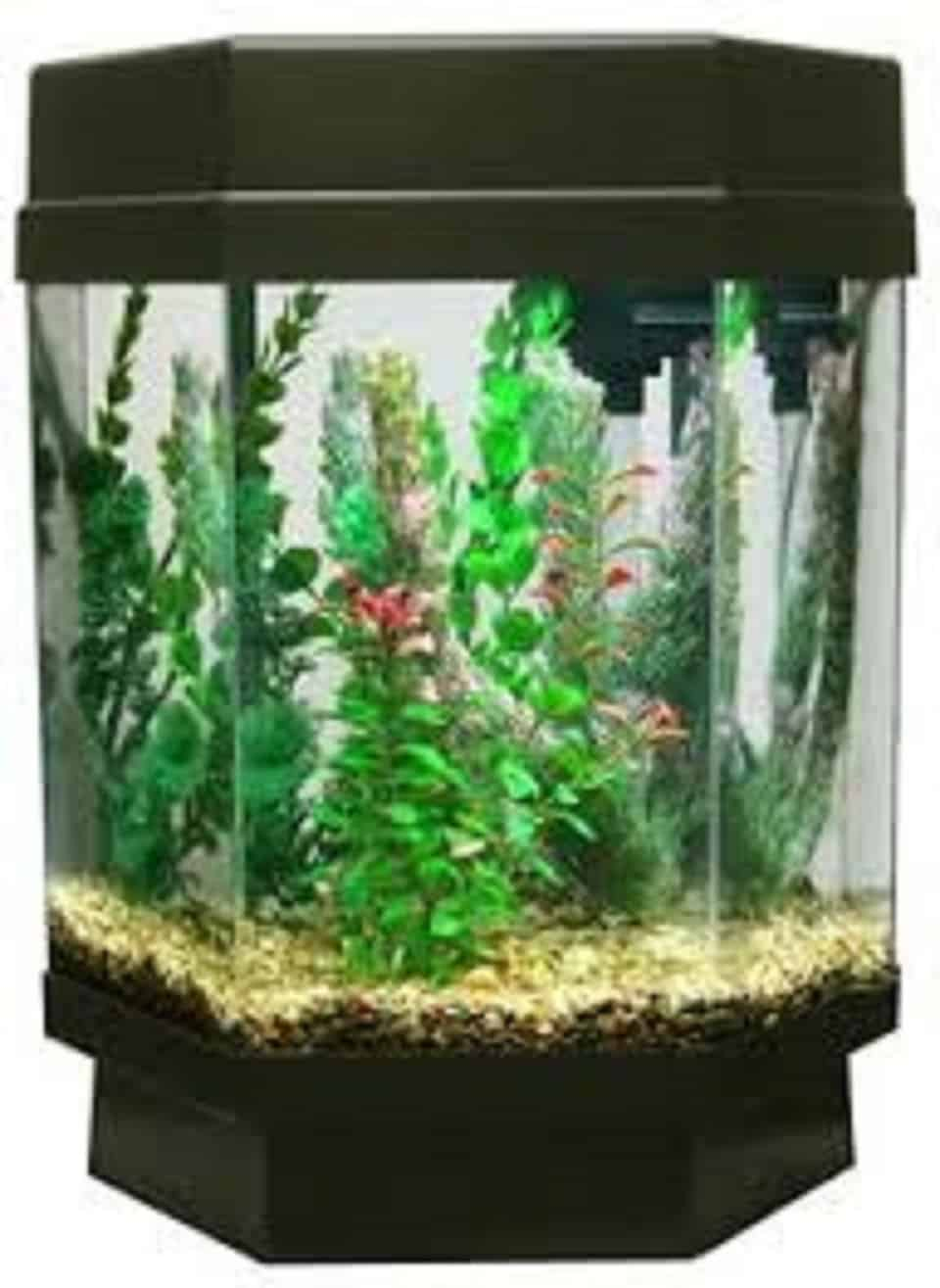 best glass fish tank