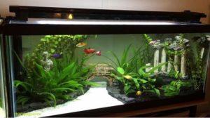 how to choose an aquariums