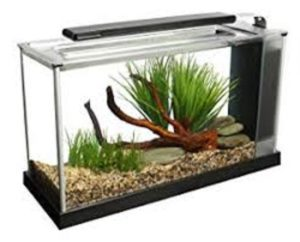 best fish tank what to consider