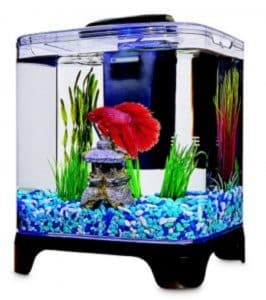 how much is a beta fish
