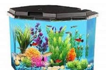 acrylic aquarium for sale