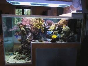 l-shaped-fish-tank
