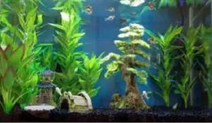 20 gallon fish tank kit
