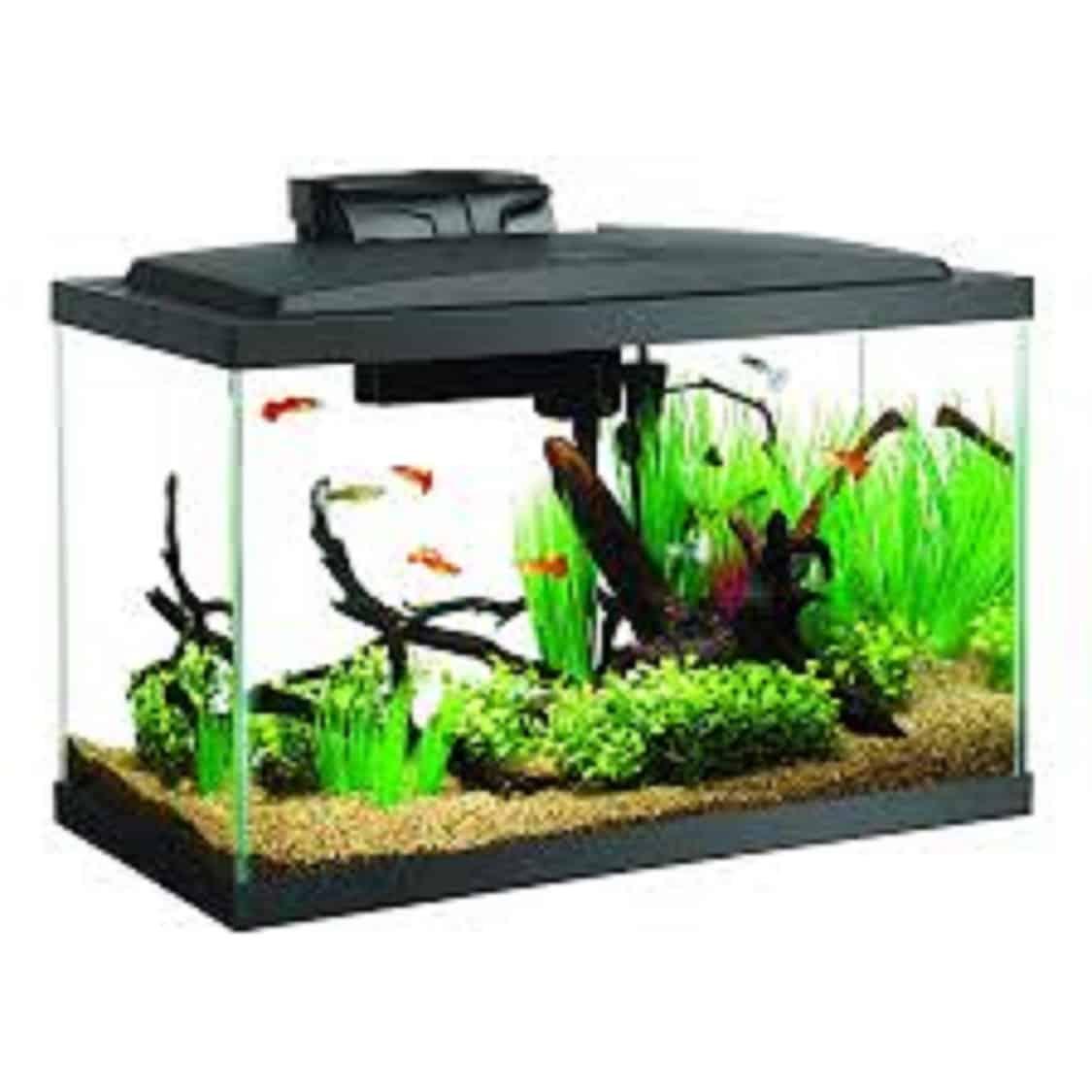 Best 10 Gallon Fish Tanks & Aquarium Kits