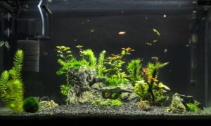 Best Filter for 100 Gallon