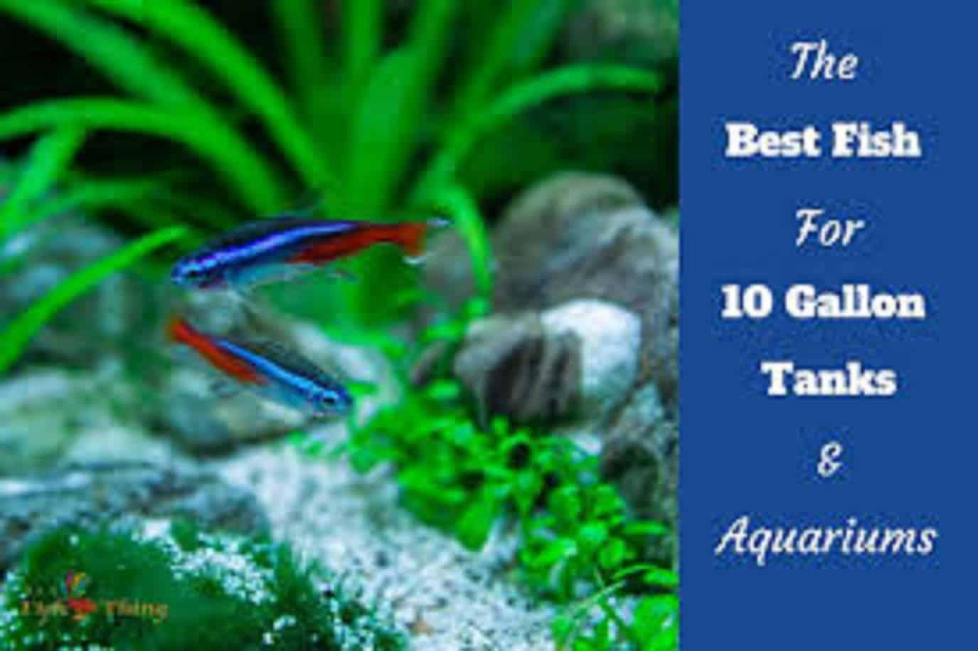 Best Fish And Invertebrates For A 10 Gallon Fish Tank
