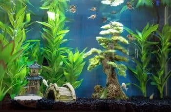 best 20 gallon fish tanks aquarium kits
