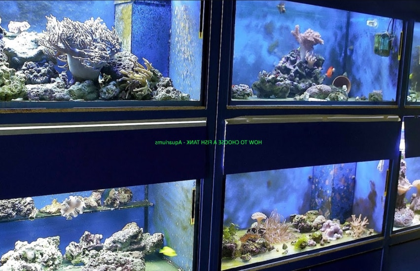 HOW TO CHOOSE A FISH TANK - Aquariums