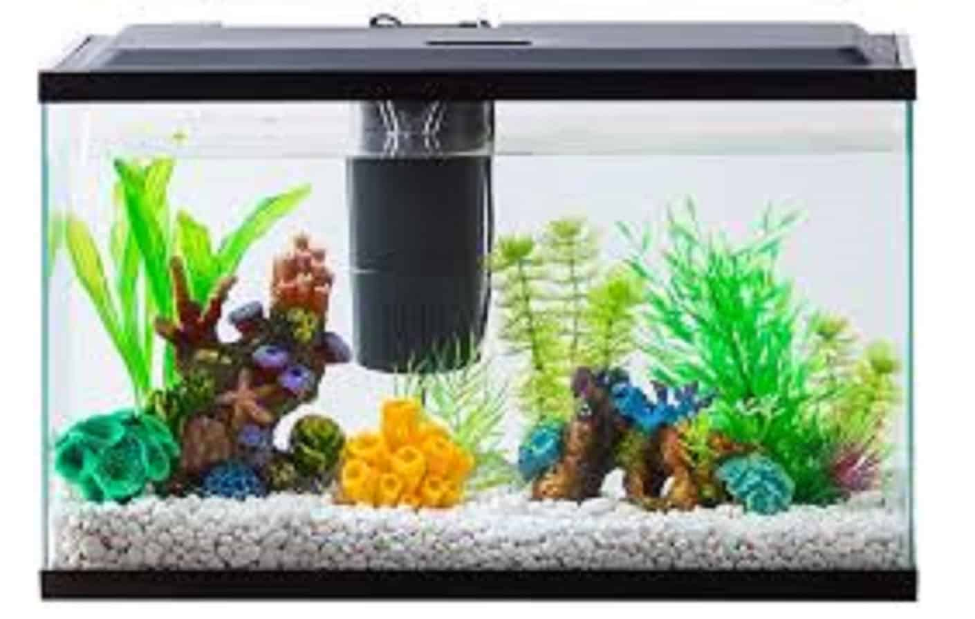 filter-for-20-gallons-aquarium