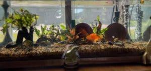 common diseases in aquarium fish