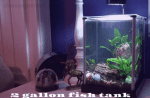 2 gallon fish tanks
