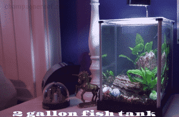 2 gallon fish tank