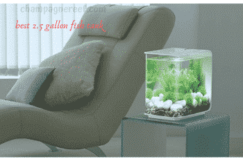best 2.5 gallon fish tank