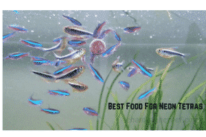 Best Food For Neon Tetras