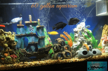 This is an image of 60 gallon aquarium