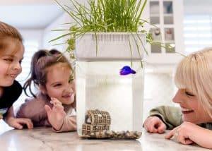 best aquaponic fish tank