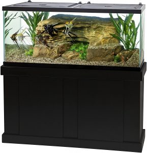 60 gallon aquarium