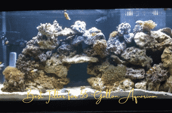 This is an image of Best Filter for 55 Gallon Aquarium