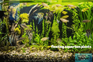 This is a photo of floating aquarium plants