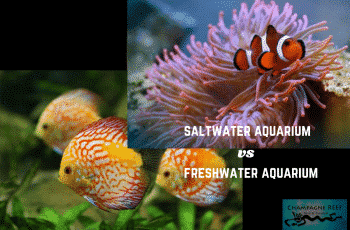 This is a photo of saltwater vs freshwater aquarium