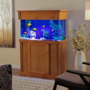 100 gallon aquariums