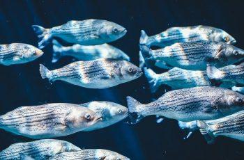 Do saltwater aquariums need protein skimmer