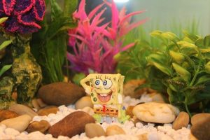 types of fish eat algae and clear you tank water